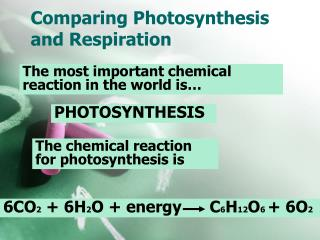 Comparing Photosynthesis and Respiration