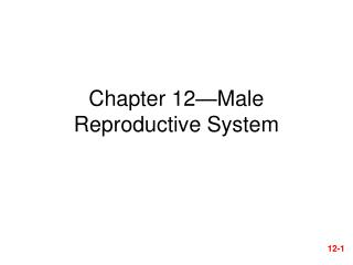Chapter 12—Male Reproductive System