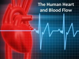 The Human Heart  and Blood Flow