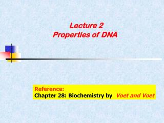 Lecture 2  Properties of DNA