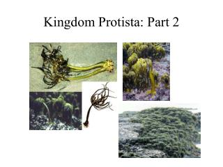 Kingdom Protista: Part 2