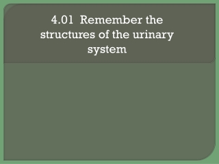 The Renal System 2
