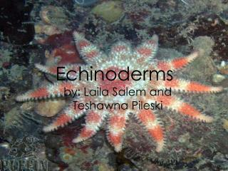 Echinoderms by:  Laila  Salem and  Teshawna Pileski