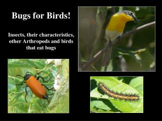 Bugs for Birds! Insects, their characteristics, other Arthropods and birds that eat bugs