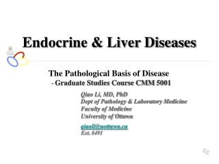 Endocrine & Liver Diseases