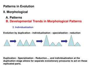Patterns in Evolution II. Morphological    A. Patterns