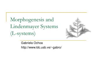 Morphogenesis and Lindenmayer Systems (L-systems)