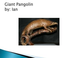 Giant Pangolin by: Ian