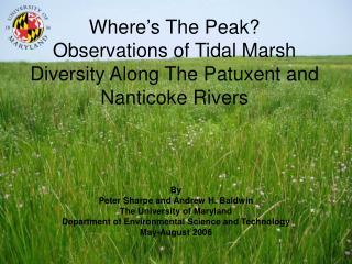 Where's The Peak?  Observations of Tidal Marsh Diversity Along The Patuxent and Nanticoke Rivers