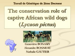 The conservation role of captive African wild dogs ( Lycaon pictus )
