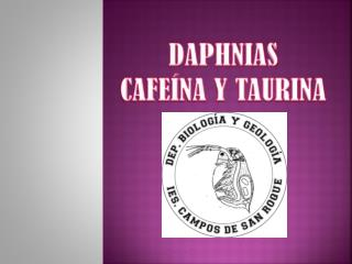 DAPHNIAS CAFEÍNA Y TAURINA