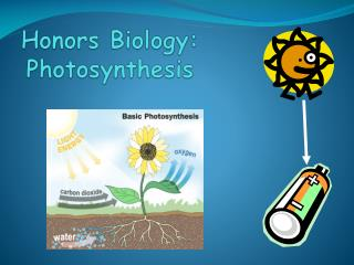 Honors Biology: Photosynthesis