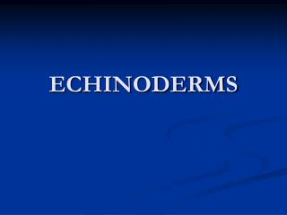 ECHINODERMS