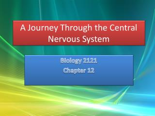 A Journey Through the Central Nervous System
