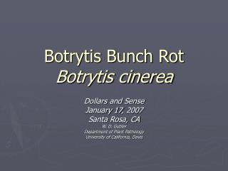 Botrytis Bunch Rot  Botrytis cinerea