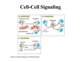Cell-Cell Signaling