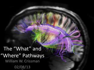 "The  "" What ""  and  "" Where ""  Pathways"