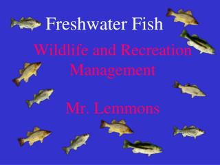 Wildlife and Recreation Management Mr. Lemmons