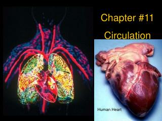 Chapter #11 Circulation