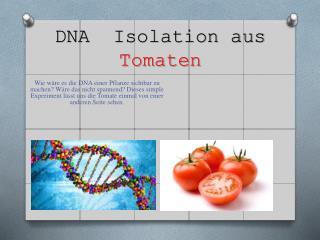 DNA  Isolation aus  Tomaten