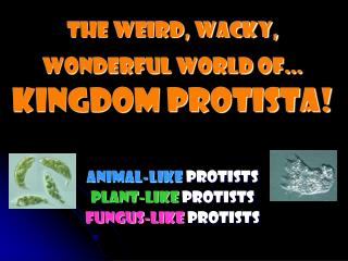 The weird, Wacky, wonderful world of… Kingdom Protista!