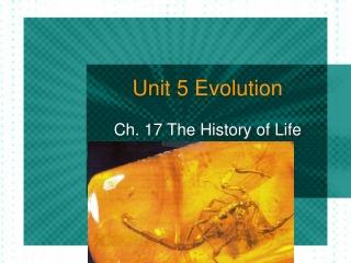 Interpreting Evolution