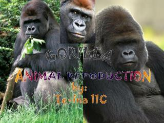 ANIMAL REPODUCTION