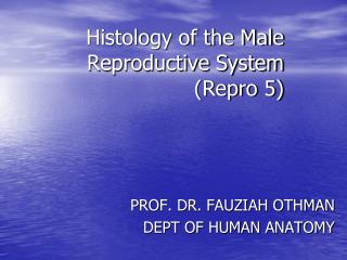 Histology of the Male Reproductive System (Repro 5)