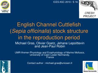 English Channel Cuttlefish  ( Sepia officinalis ) stock structure in the reproduction period