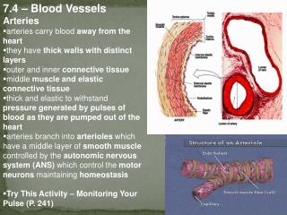 7.4 – Blood Vessels Arteries arteries carry blood  away from the heart