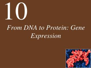 From DNA to Protein: Gene Expression