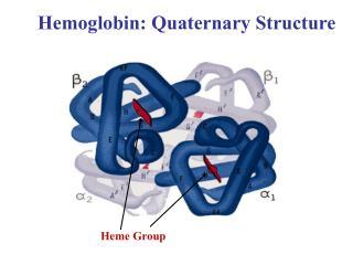 Hemoglobin: Quaternary Structure