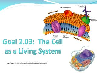 Goal 2.03:  The Cell as a Living System
