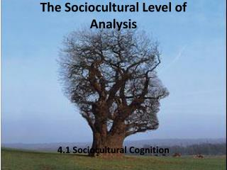 The  Sociocultural  Level of Analysis