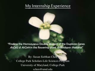 By: Susan Siobhan Chen College Park Scholars-Life Sciences Program
