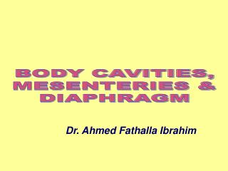 BODY CAVITIES, MESENTERIES & DIAPHRAGM