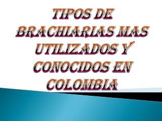 TIPOS DE BRACHIARIAS MAS UTILIZADOS Y CONOCIDOS EN COLOMBIA