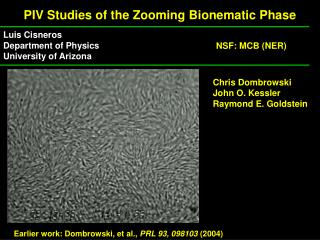 PIV Studies of the Zooming Bionematic Phase