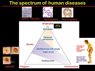 The spectrum of human diseases