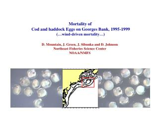 Mortality of  Cod and haddock Eggs on Georges Bank, 1995-1999 (…wind-driven mortality…)