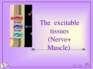 The  excitable tissues (Nerve+ Muscle)