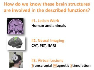 How do we know these brain structures are involved in the described functions?