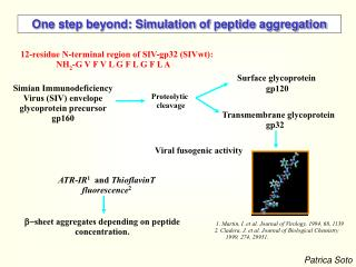 One step beyond: Simulation of peptide aggregation