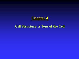 Chapter 4 Cell Structure: A Tour of the Cell