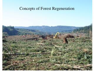 Concepts of Forest Regeneration