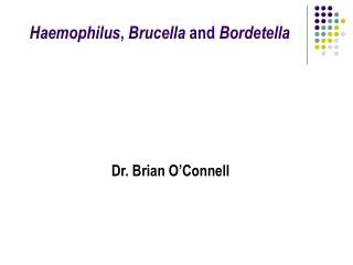 Haemophilus ,  Brucella  and  Bordetella