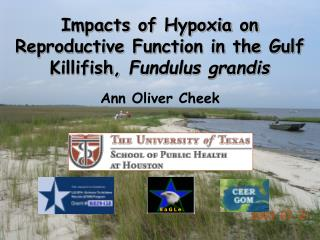 Impacts of Hypoxia on Reproductive Function in the Gulf Killifish,  Fundulus grandis