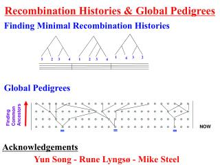 Recombination Histories & Global Pedigrees