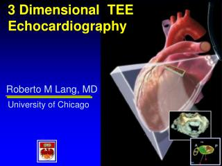 3 Dimensional TEE Echocardiography