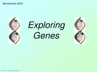 Exploring Genes